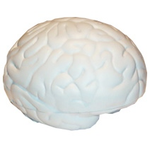 Small Brain Stress Toy