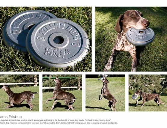 Promotional Frisbees Reveal Strength Giving Properties of Iams Dog Food #CleverPromoGifts