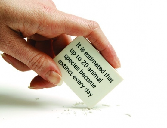 Promotional Erasers Deliver a Sobering Message About Extinction for the Natural History Museum #CleverPromoGifts
